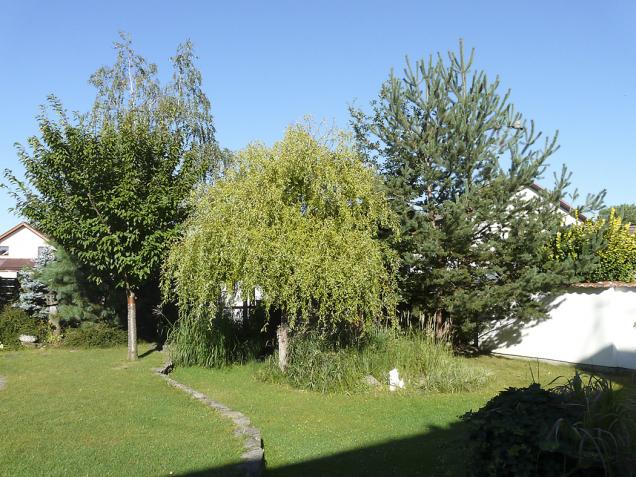 Vrba uprostřed nevěští dobudoucna nic dobrého: bude velká, křehká ashodí spoustu listí. Její dřevo je bezcenné. Navíc zakrývá posezení, ze kterého není vidět dozahrady.
