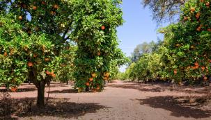 Zahradníka Pavla Kukala zČeské zemědělské univerzity jsme se zeptali na pěstování aošetřování oblíbených meruněk abroskvoní. Přesvědčil nás, že idoma na zahradě lze dosáhnout velmi dobrých výsledků, budete-li pečliví apřihlédnete-li kdaným podmínkám pěstování.