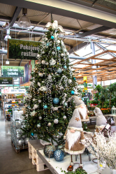 Polární Vánoce (Zdroj: Hornbach)