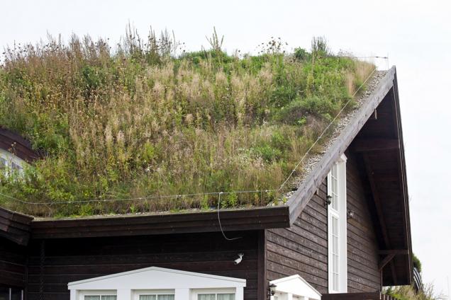Ozelenit střechu dřevostaveb? Ano! A to přesto, že se dřevostavby většinou nacházejí na okrajích velkých měst či v menších městech nebo na vesnicích, kde je zeleně obvykle dostatek. Smysl tu však zelené střechy mají – plní stejné funkce, z nichž především kvalitnější hospodaření s vodou a větší produkce kyslíku nabývají na důležitosti kdekoli. (Zdroj: ISOVER)