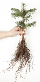 Ze semínka vyroste semenáček (Zdroj: Hornbach)