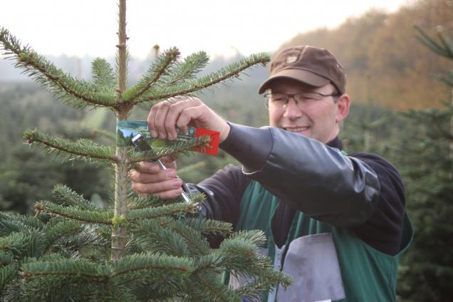 Když stromek vyroste (Zdroj: Hornbach)