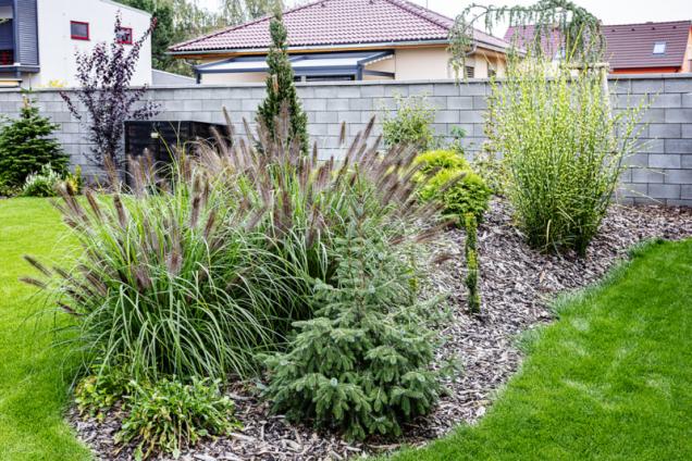 Podél zdí kolem zahrady postupně vyrostou jehličnaté i listnaté stromy a keře a vytvoří příjemný stín i zelenou clonu