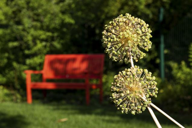 V hájku za domem je umístěna lavička, která zde vytváří příjemný barevný akcent a nabízí příjemné místo k rozjímaní v klidu a ve stínu. Oživujícím prvkem jsou trvalky v pastelových barvách