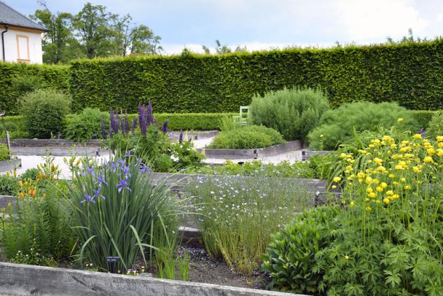 Zatímco dříve v zahradě rostly pro dnešního zahrádkáře spíše běžné rostliny, dnes tu najdete i druhy z druhého konce světa