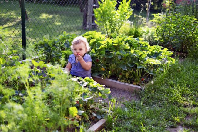 Zelenina a bylinky se nacházejí převážně ve vyvýšených záhoncích, drobné ovoce bylo vysázeno po celé zahradě