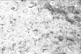 Mikroskopicky hladký povrch Baumit NanoPorTop znesnadňuje usazování nečistot (zdroj: Baumit)