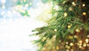 Vánoční větev (zdroj: Shutterstock)