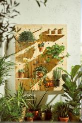 Zelená stěna (zdroj: Hornbach)