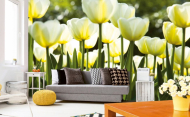 Fototapeta bílé tulipány (zdroj: Hornbach)