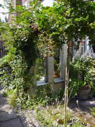 Beztrnný ostružiník se může stát vítanou součástí okrasné zahrady. Využijete ho třeba jako součást loubí