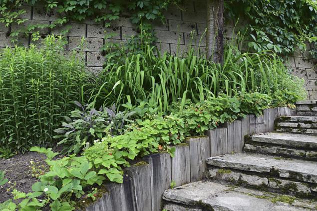 Jahodník měsíční už dávno nepatří jen do užitkové zahrady, zahradní architekti s ním pracují jako s efektním podrostem