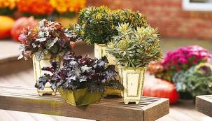Podzimní kouzlení v truhlících a květináčích